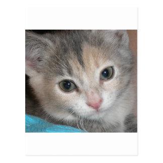 子猫 ポストカード