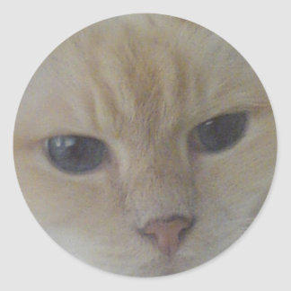 子猫(Hughie) ラウンドシール
