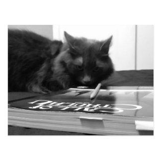 子猫DMの賭博の ポストカード