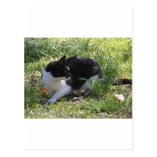 子猫Kat ポストカード