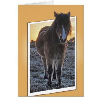 子馬の排気切替器カード グリーティングカード