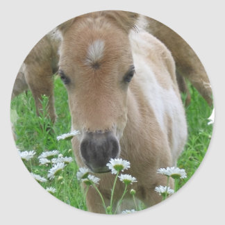 子馬の臭いがするデイジーのステッカー ラウンドシール