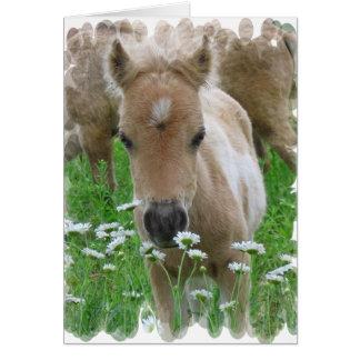 子馬の臭いがするデイジーの挨拶状 カード
