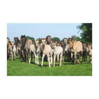 子馬を持つDuelmenの子馬の野生の群れ キャンバスプリント