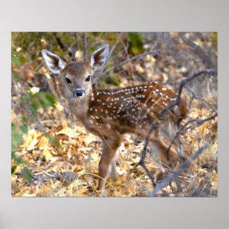 子鹿のシカの写真ポスター ポスター