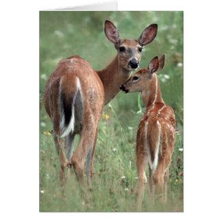 子鹿を持つ白後につかれたシカ カード