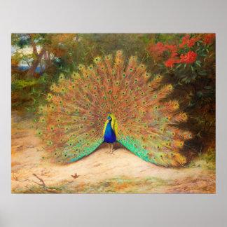 孔雀および孔雀蝶 ポスター