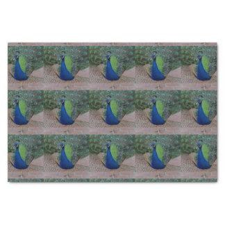 孔雀のティッシュペーパー 薄葉紙