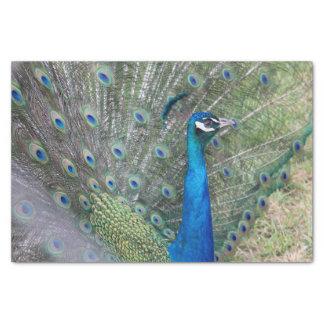 孔雀の写真撮影 薄葉紙