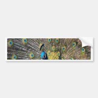 孔雀の美しいの平和平静および喜び バンパーステッカー