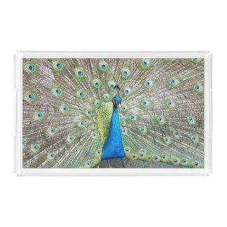 孔雀の羽の写真 アクリルトレー