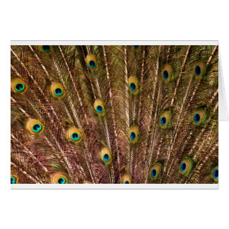孔雀の羽パターン グリーティングカード