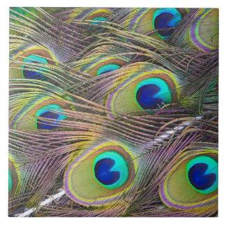 孔雀の羽 タイル