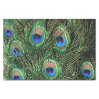 孔雀の羽 薄葉紙