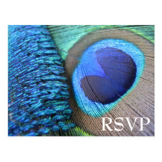 孔雀の羽RSVPの郵便はがき ポストカード