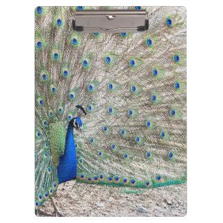 孔雀の鳥の野性生物動物の羽のクリップボード クリップボード