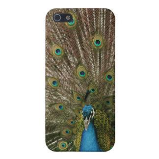 孔雀のiPhoneの場合 iPhone 5 Case
