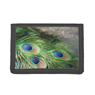 孔雀は青緑に羽をつけます