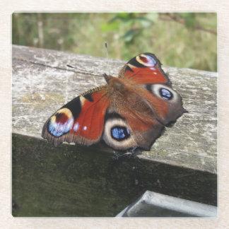 孔雀蝶コースター ガラスコースター