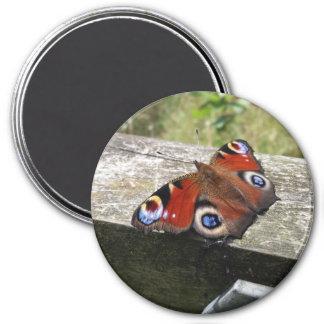 孔雀蝶磁石 マグネット