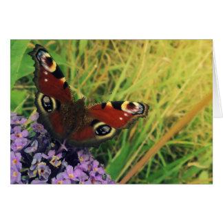 孔雀蝶 グリーティングカード