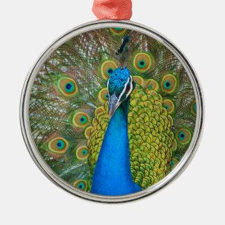 孔雀青の頭部とのおよびカラフルな尾羽 メタルオーナメント