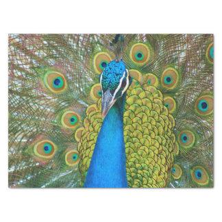 孔雀青の頭部とのおよびカラフルな尾羽 薄葉紙