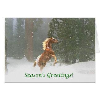 季節の挨拶のAppaloosaの馬 カード