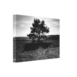孤独な木 キャンバスプリント