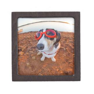 安全犬 ギフトボックス