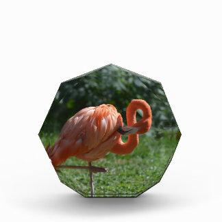 完全なピンクのフラミンゴ 表彰盾