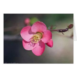 完全なピンクの花盛りのマルメロ カード