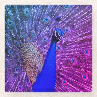 完全な栄光の孔雀 ガラスコースター