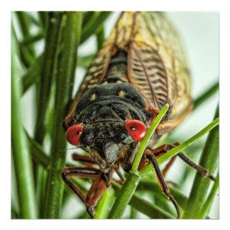 定期刊行蝉の大きい昆虫のマクロ写真 フォトプリント