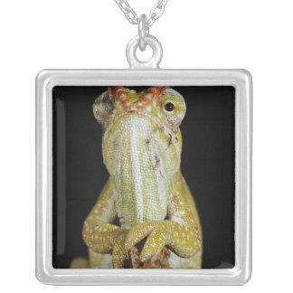 宝石で飾られたカメレオン、かCampanのカメレオン シルバープレートネックレス