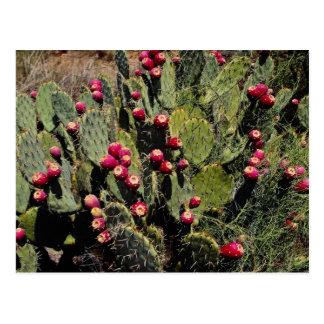 実を結んだウチワサボテンサボテン、Sonoranの砂漠 ポストカード