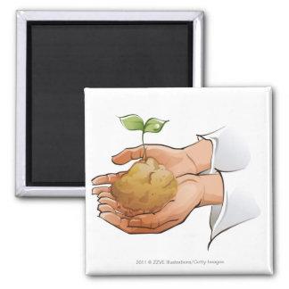 実生植物を握る人の手のクローズアップ マグネット