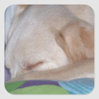 実験室の子犬の睡眠 スクエアシール