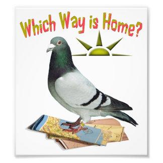 家はどの方向ですか。 おもしろいハトポスター フォトプリント