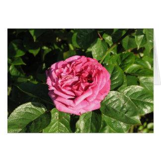 家宝の雑種の茶バラ027 カード