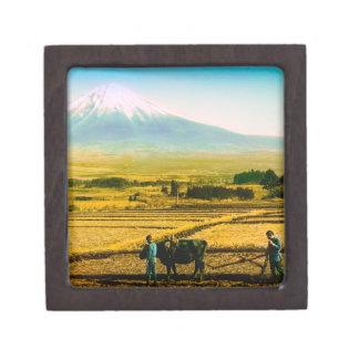 富士山の影の分野を耕している農家のウシ ギフトボックス
