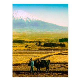 富士山の影の分野を耕している農家のウシ ポストカード