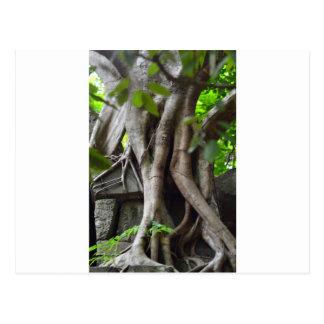 寺院の台なしは緑豊かなジャングルで失った ポストカード