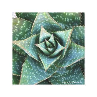 対称を示すアロエのsaponaria キャンバスプリント