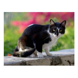 射撃手の居酒屋のローカル猫 ポストカード