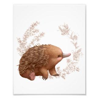 小さいオーストラリアの友人-ハリモグラ フォトプリント