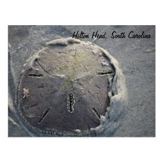 小さいカニの乗馬の砂ドル ポストカード