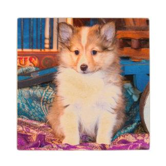 小さいワゴンで坐っているシェットランド・シープドッグの子犬 ウッドコースター