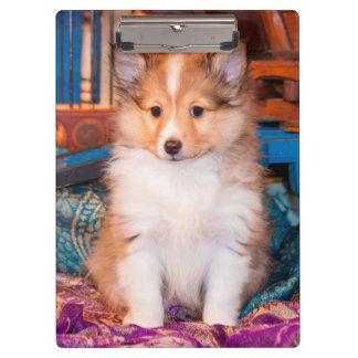 小さいワゴンで坐っているシェットランド・シープドッグの子犬 クリップボード