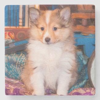 小さいワゴンで坐っているシェットランド・シープドッグの子犬 ストーンコースター